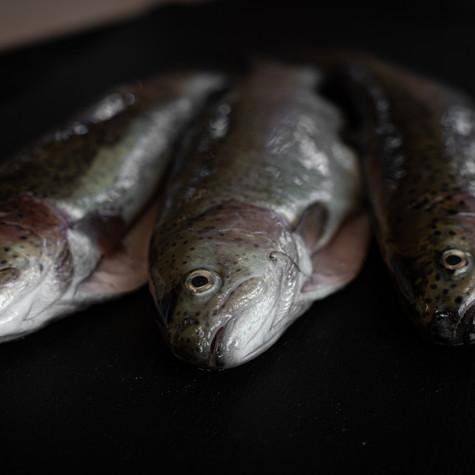 Fische.jpg