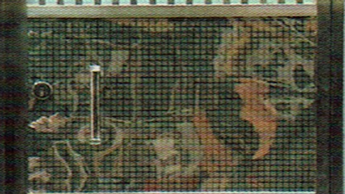WG 135
