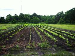 Top Soil for your Garden!