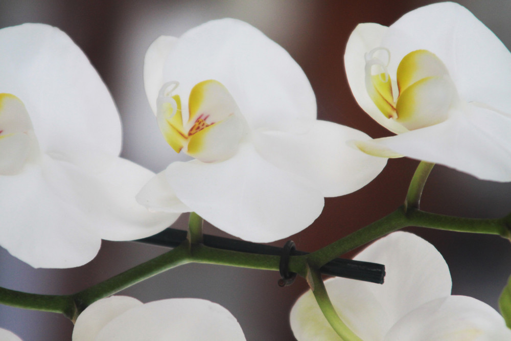 Photo of an Exquisite White Orchid in Bloom