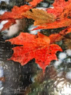 Show_LeafPuzzle.jpg