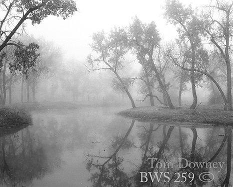 BWS259