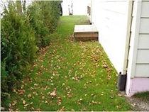 Sault House Hedge.jpg