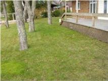 Sault House Tree Save.jpg