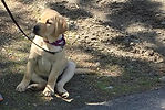 LuvPup-TDA_HomePage-Button4.jpg