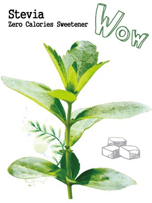 What is Stevia? 스테비아란