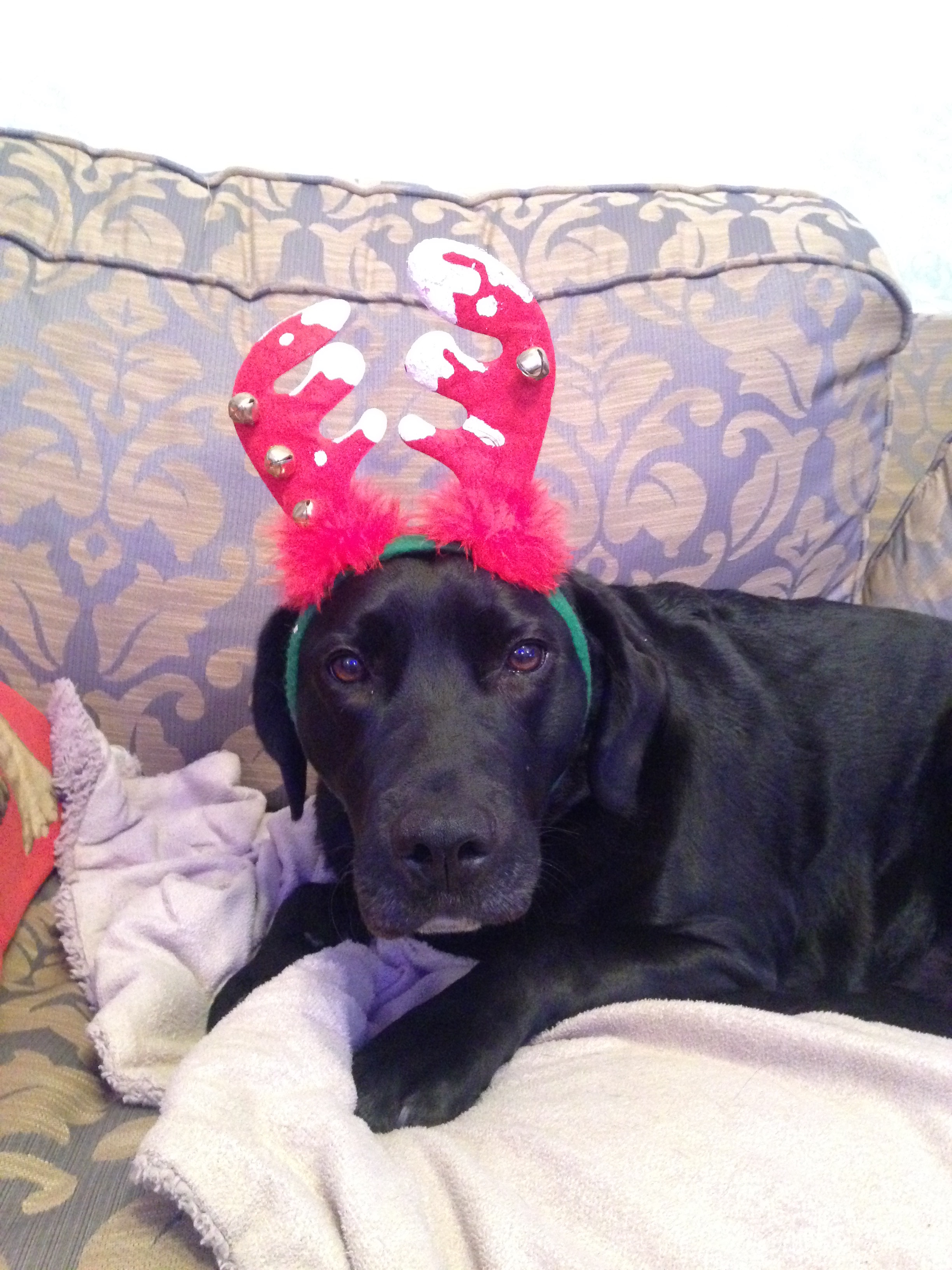 Best reindeer ever