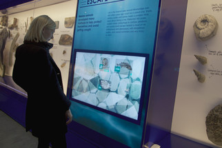 Kimmeridge Fossil Museum
