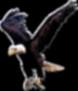 MiC Eagle.png