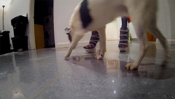 dog-sniffs
