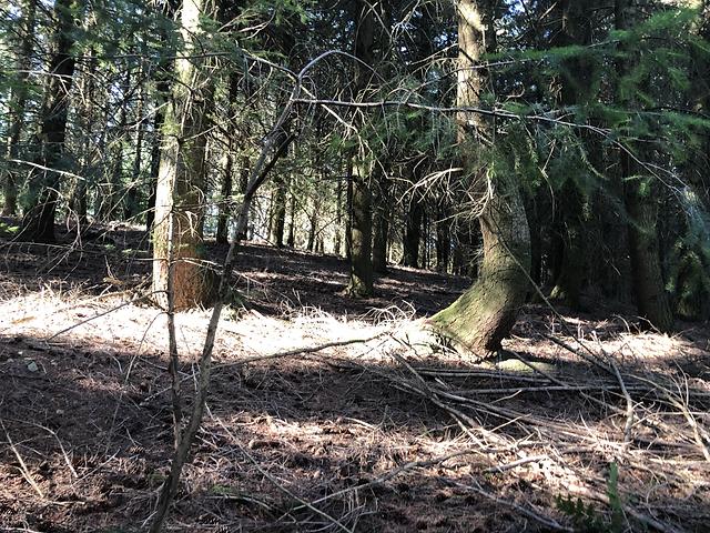 arbre 2.HEIC