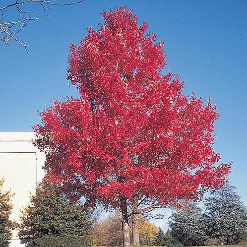 Tree Option 4