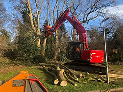 Ash tree take down.jpg