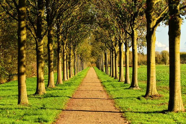 row of trees.jpg