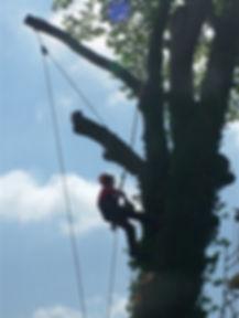 Trees (14).jpg