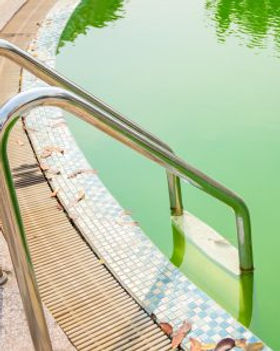 Green pools and algae clean to prevent stains and clear up mold