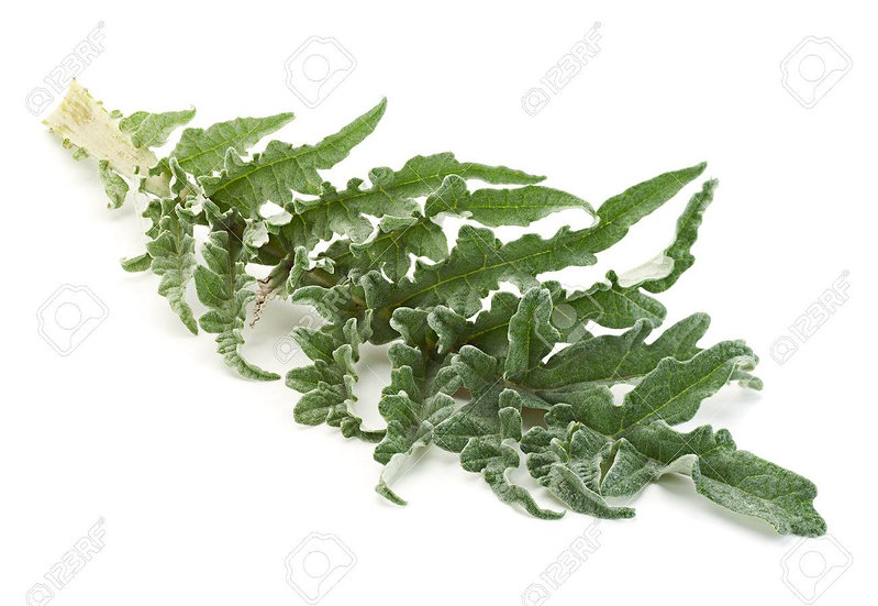 Élimination- artichaut ortie lavande - feuilles et fleurs séchées - sachet 25g