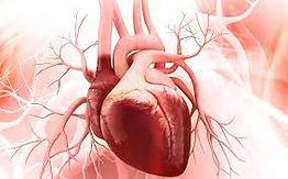 coeur humain.jpg