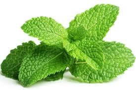 Tonique digestive-  romarin ortie menthe verte - feuilles séchées - sachet 25g
