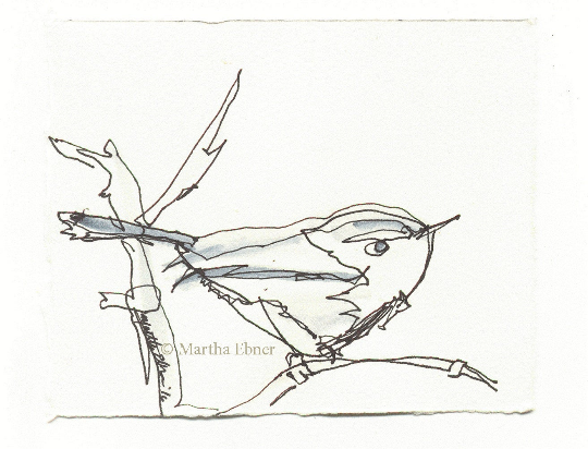 martha ebner bushtit drawing