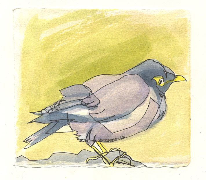 martha ebner mynah bird drawing
