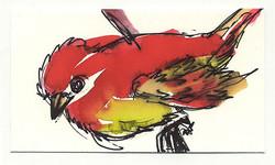 drawing_marthaebner_redbird