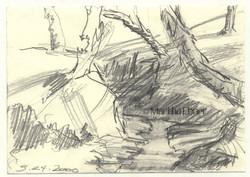 martha ebner stream + trees drawing