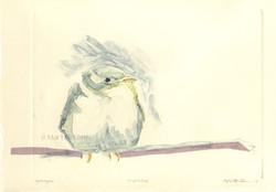 martha ebner perfect bird monotype