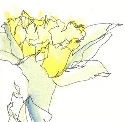 martha ebner narcissus drawing