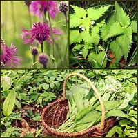 Plantes-sauvages.jpg