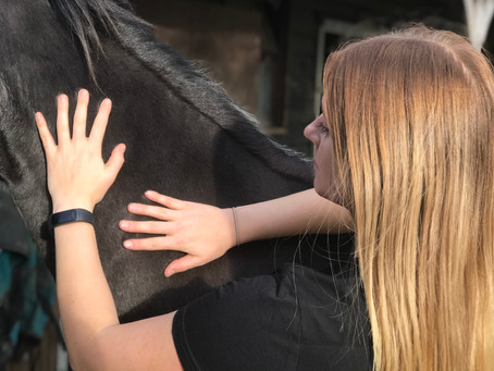 WHAT IS EQUINE SPORTS MASSAGE & REHABILITATION THERAPY?