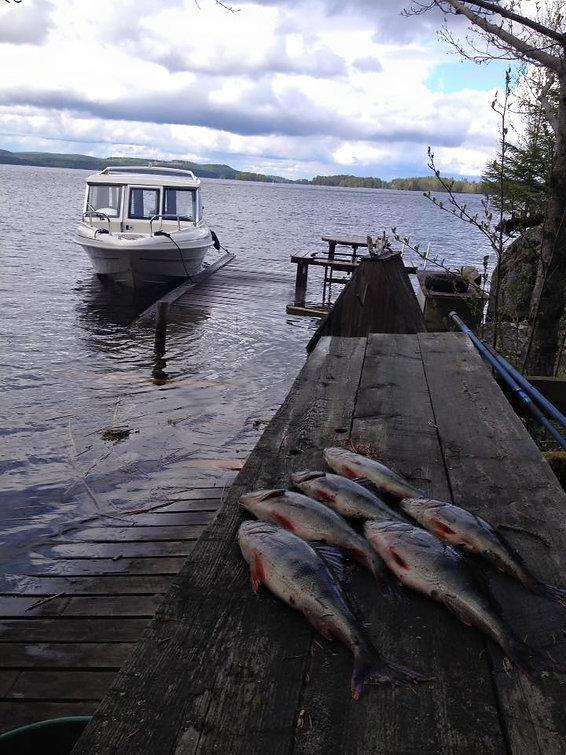 pynnönsaari, kalastus, äijänkäppyrä, keitelejärvi,järvikalastus
