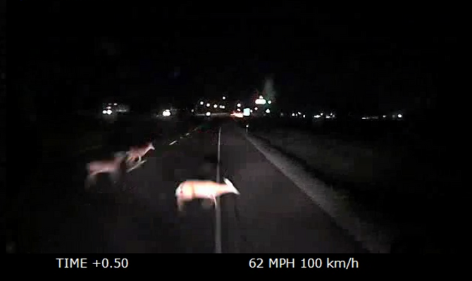Driving Tactics, Avoiding Deer: Do Not Swerve