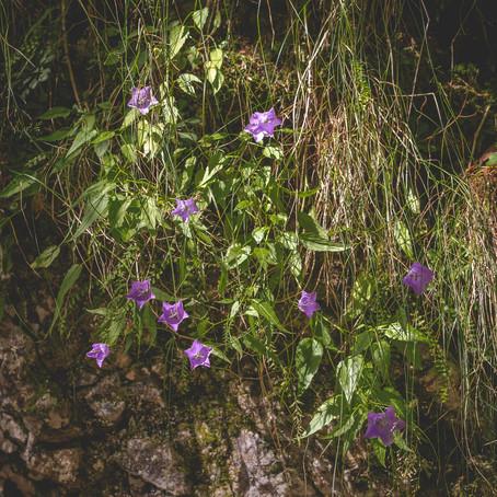 Telt DIT nog als WATERVAL? - LANDSCHAPSFOTOGRAFIE in ROEMENIE