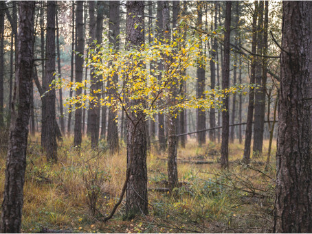 Die ene boom en de schotse hooglanders - HERFST LANDSCHAPSFOTOGRAFIE in DORST