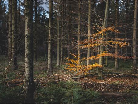 Het BOS en de POLARISATIEFILTER - LANDSCHAPSFOTOGRAFIE in AMERONGEN