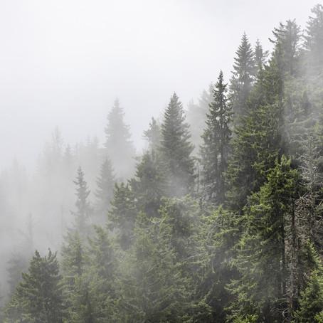 Met m'n hoofd in de wolken - Landschapsfotografie in Roemenië