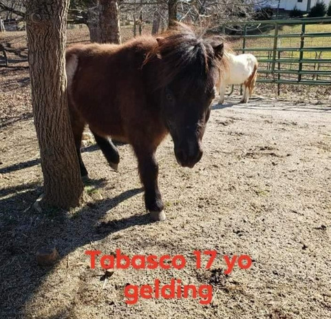 Tabasco - pair with Saratoga
