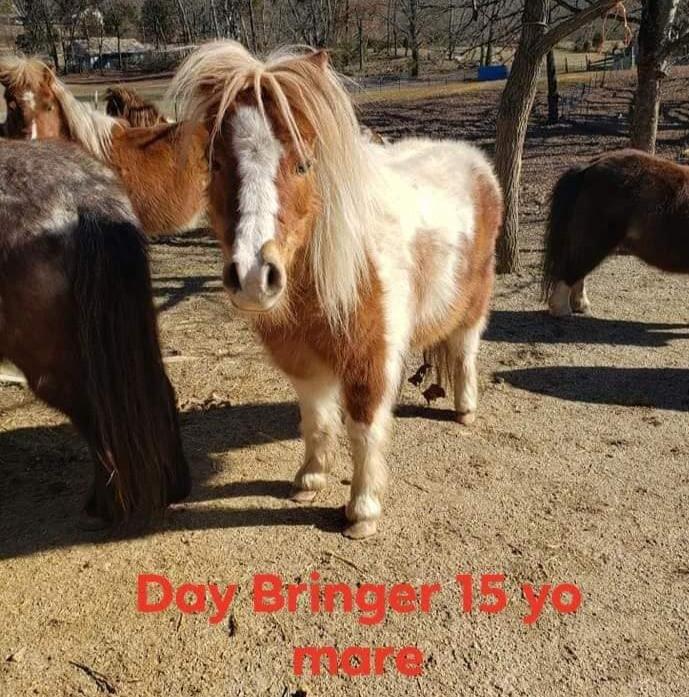 Day Bringer