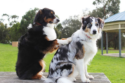 Hundemassasje på Dogtales