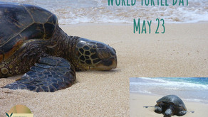 May 23, 2020 World Turtle Day