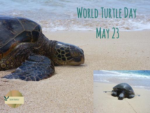 23 Mei 2020 Wereldschildpaddendag