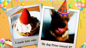 Birthday cake for your dog
