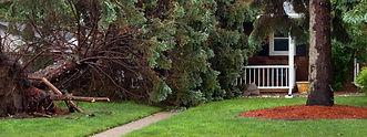Salas Services Tree Removal