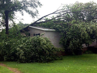 Why do some trees fall during storms and others don't?