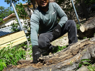 Easily Detecting Tree Health Issues