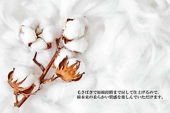 綿マイヤー.jpg