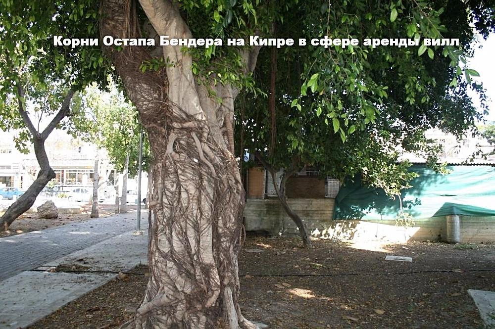 Кипр, авантюра в сфере аренды