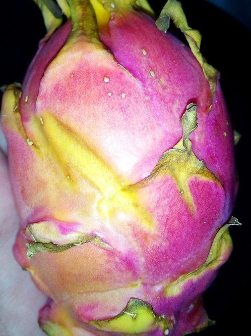 фрукт дракон