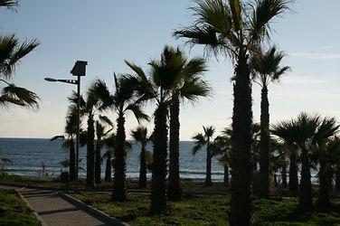 Кипр, перволия